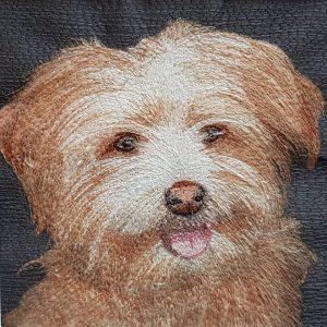 susie dog